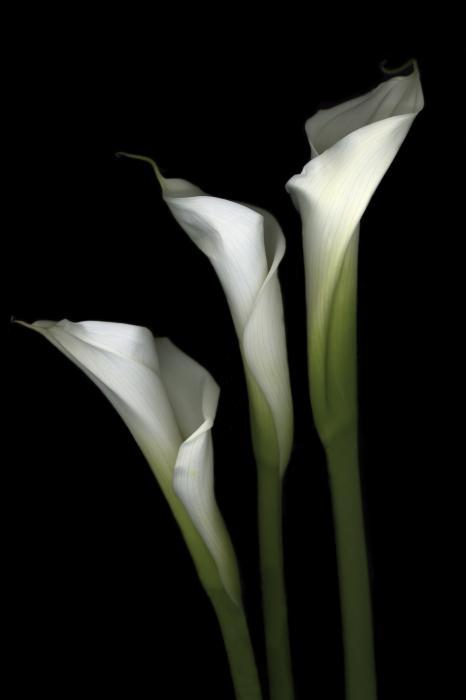 White Elegance Photograph by Marsha Tudor - White Elegance Fine ...