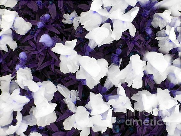 Tisha McGee - White Flowers