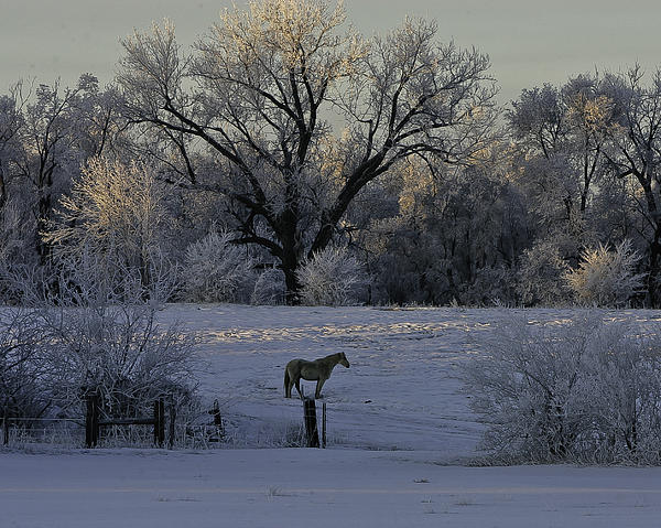 White Horse Winter Print by Kenneth McElroy