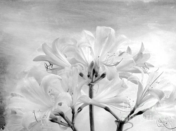 White Lillies Print by Marsha Heiken