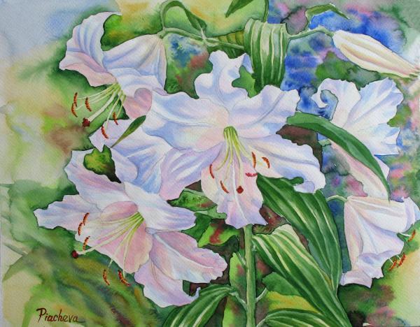 Natalia Piacheva - White Lily. 2007
