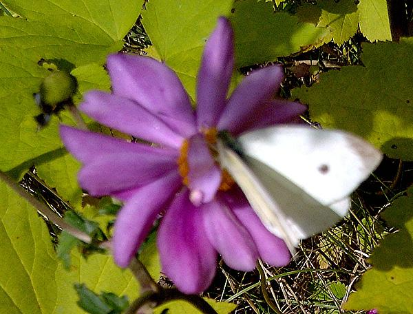 Sandra Maddox - White on Purple