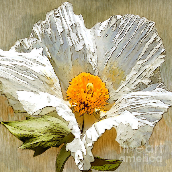White Paper Flower Print by Artist and Photographer Laura Wrede