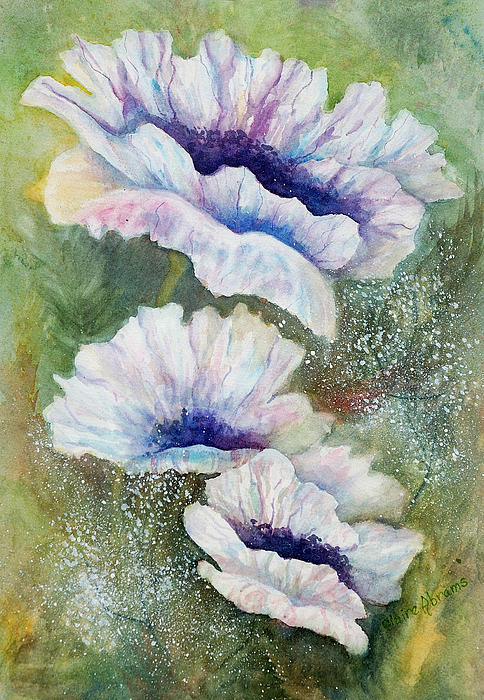 Claire  Abrams - White Poppies