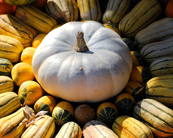 White Pumpkin Print by Jai Johnson