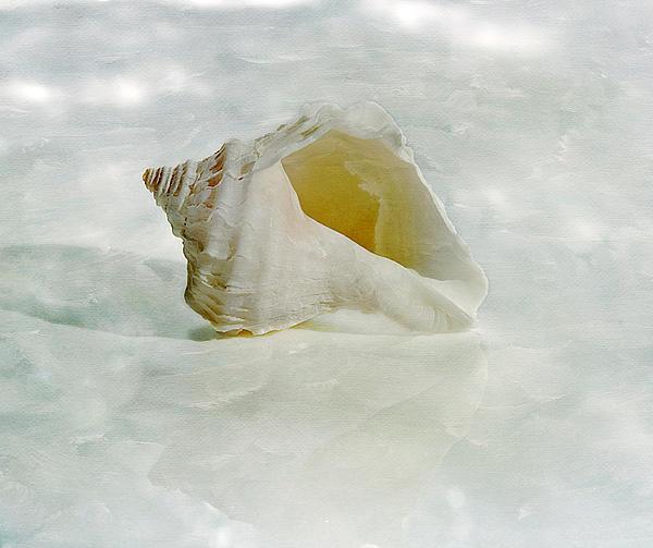 Cindi Ressler - White Seashell