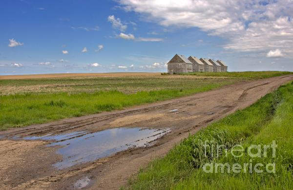 White Sheds On A Prairie Farm In Spring Print by Louise Heusinkveld