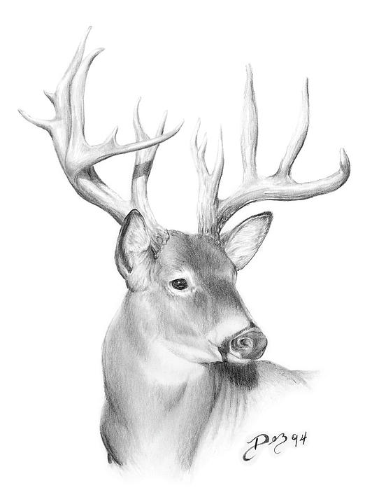 deer drawings - photo #16