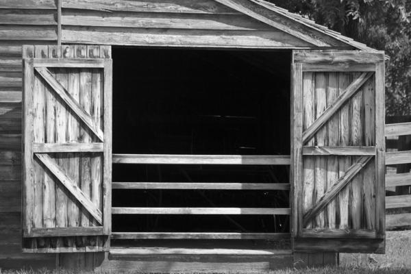 Who Opened The Barn Door Print by Teresa Mucha