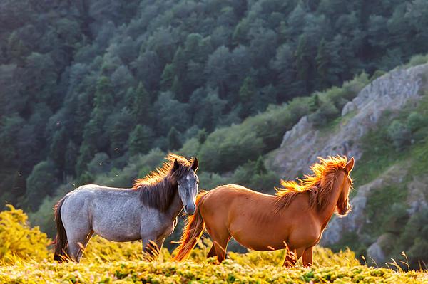 Evgeni Dinev - Wild Horses
