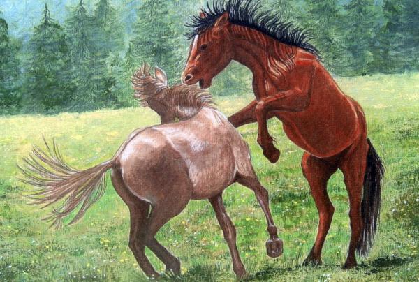 http://images.fineartamerica.com/images-medium/wild-horses-lorraine-foster.jpg