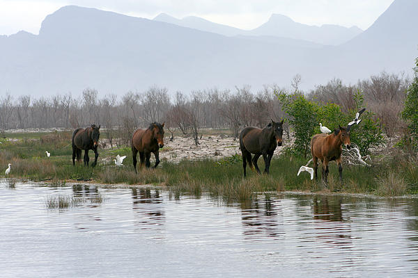 Deborah Hall Barry - Wild Horses of South Africa