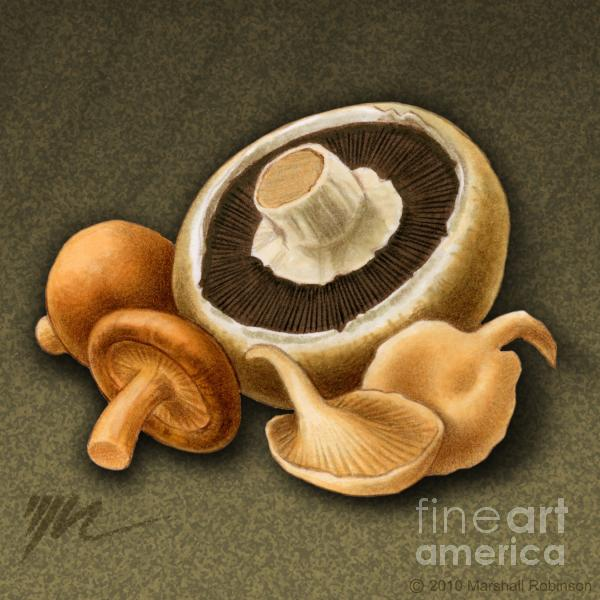 Wild Mix Mushrooms Drawing  - Wild Mix Mushrooms Fine Art Print