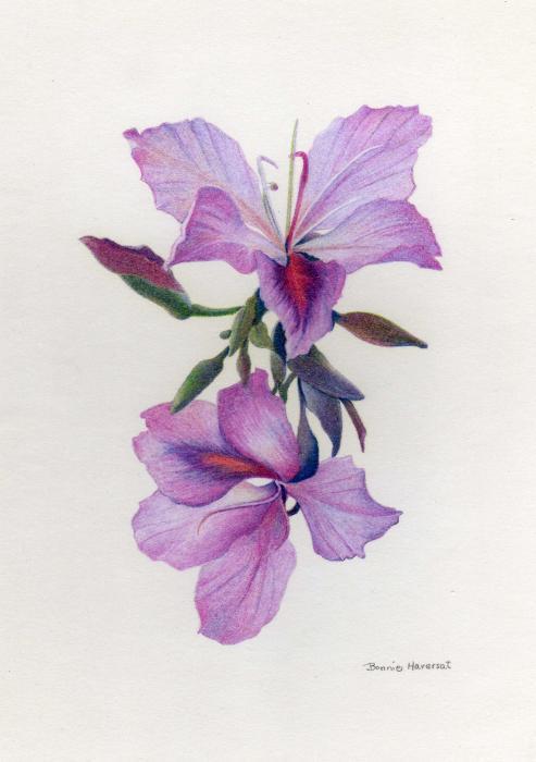 Wild Orchids by Bonnie Haversat