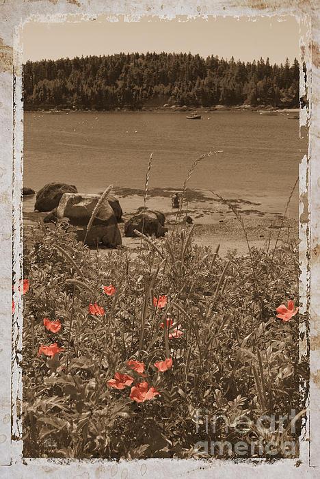 Jim Wright - Wild roses