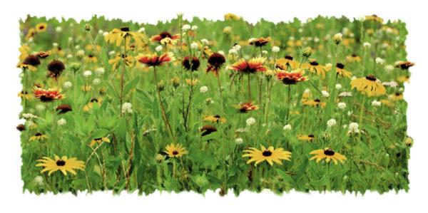 Wildflower Meadow Print by JQ Licensing