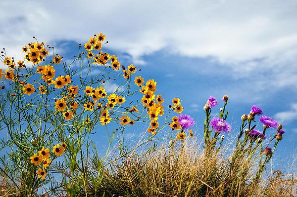 Wildflower Weed Print by Tamyra Ayles
