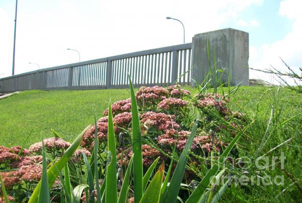 Wildflowers Beside The Bridge Print by Marsha Heiken