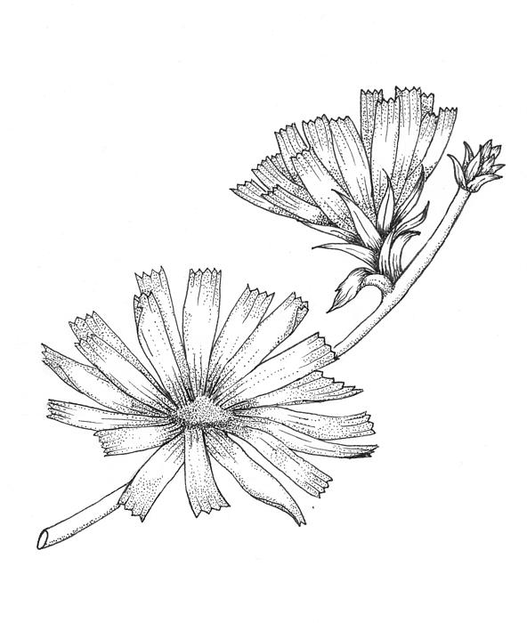 Wildflowers Print by Marci Mongelli