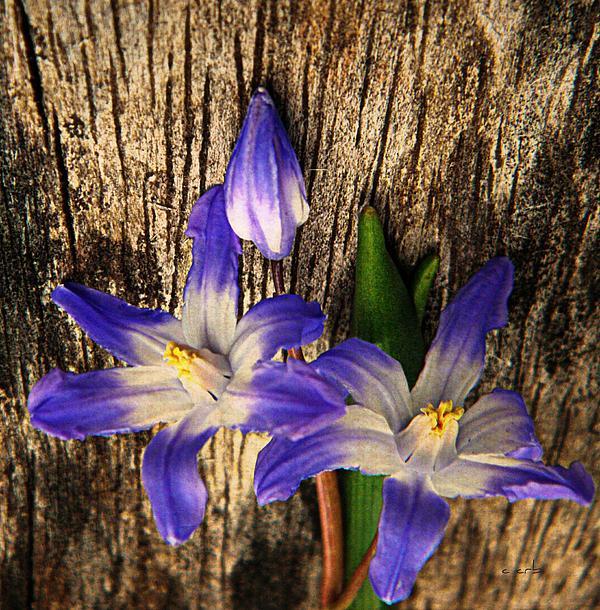 Wildflowers On Wood Print by Chris Berry