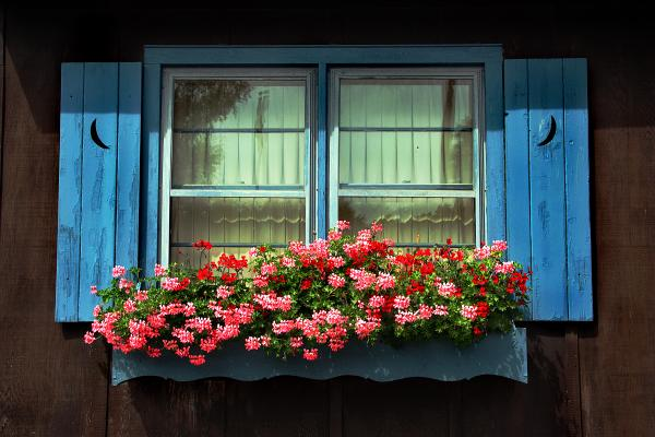window flower box greeting card for sale by joanne coyle