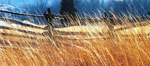 Angela Davies - Windswept Gettysburg Battlefield