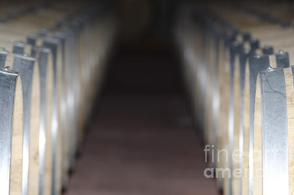 Wine Barrels In Line Print by Mats Silvan
