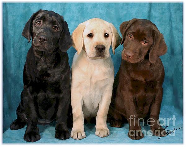 Winkin Blinkin And Nod  Lab Puppies Print by Maxine Bochnia