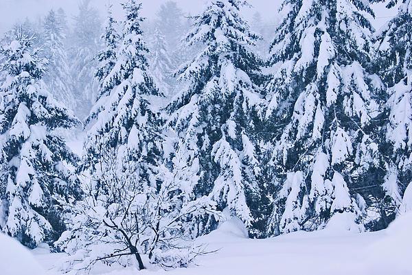 Winter Coat Print by Aimelle