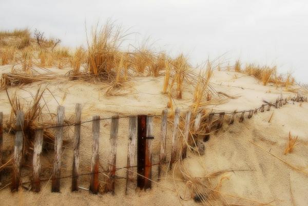 Winter Dune - Jersey Shore Print by Angie Tirado