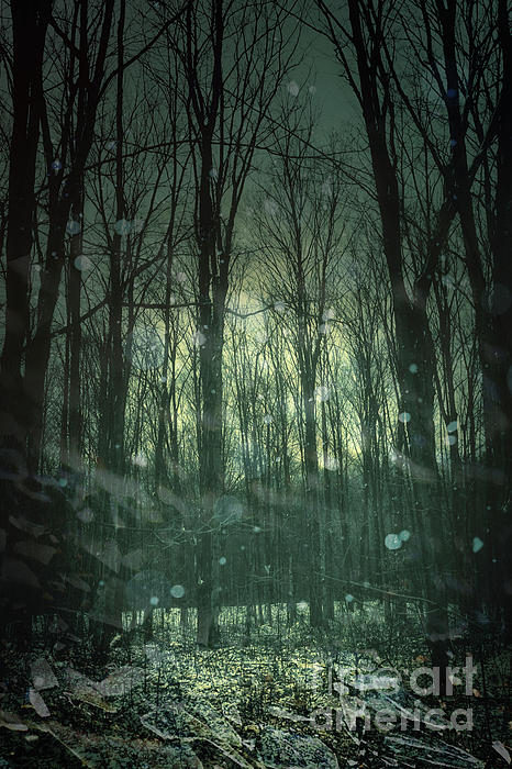 Winter Forest At Twilight Print by Sandra Cunningham