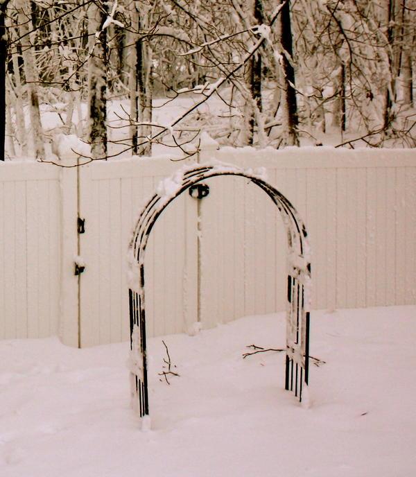 Kristine Betts - Winter Garden