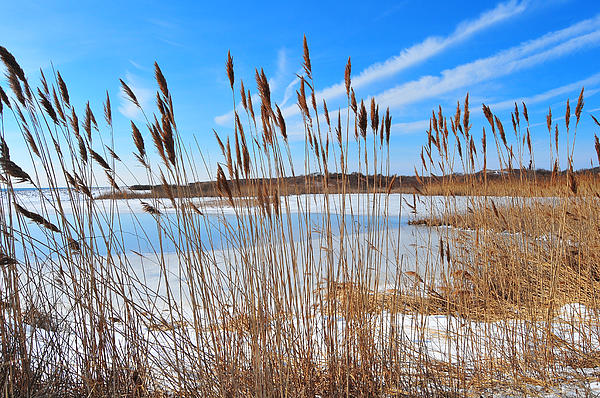Winter In The Salt Marsh Print by Catherine Reusch  Daley
