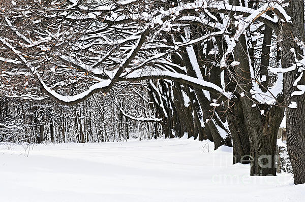 Winter Park With Snow Covered Trees Print by Elena Elisseeva