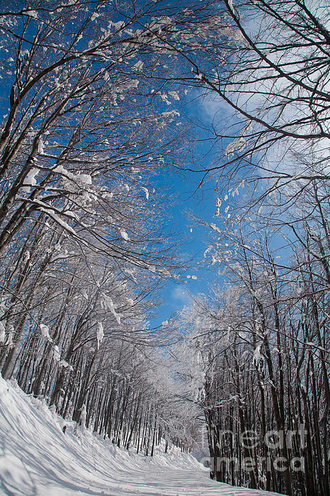 Winter Road Print by Evgeni Dinev