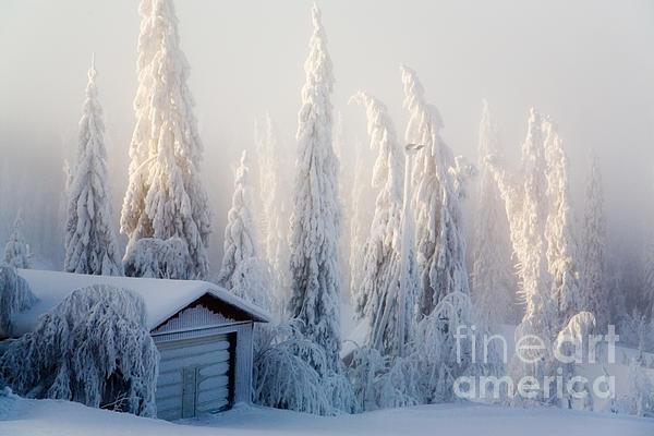 Winter Scene Print by Kati Molin