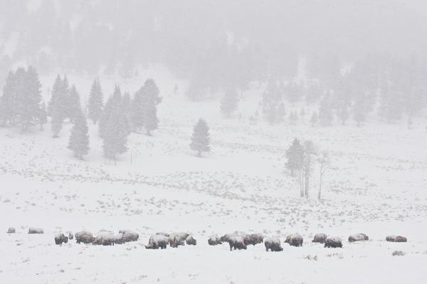 Winter Storm Print by D Robert Franz