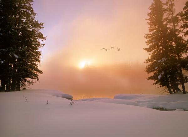 Winter Swans Print by Leland D Howard