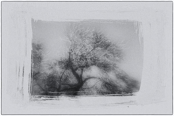 Winter Trees Print by David Ridley