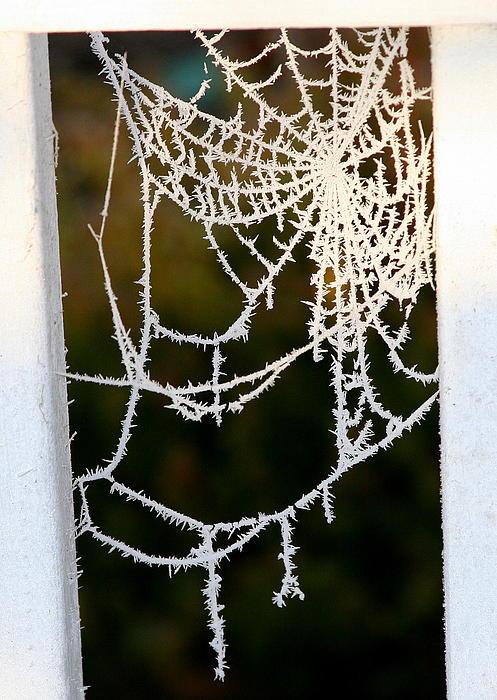 Paula Tohline Calhoun - Winter Web