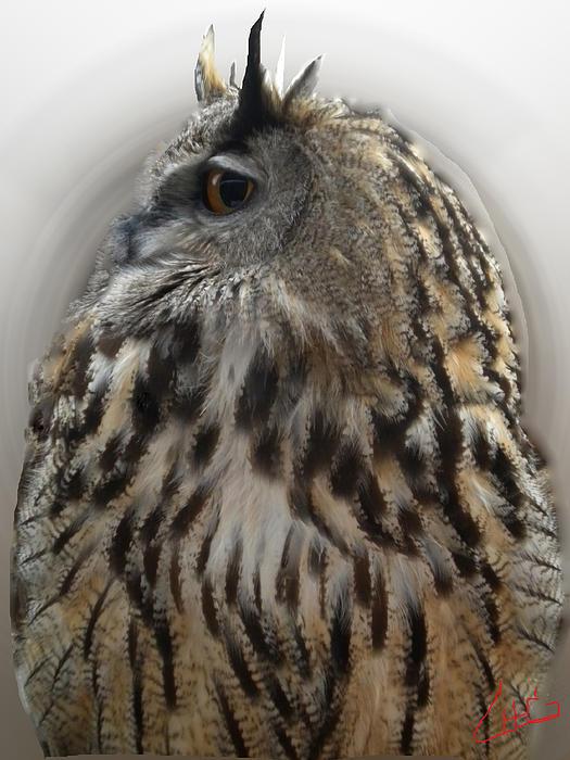 Colette V Hera  Guggenheim  - Wise Forest Owl Alicante Region Spain