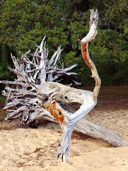 Joan Meyland - Wood Sculpture