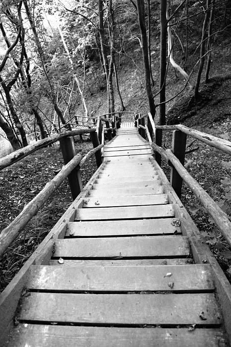 Wooden Stairs Print by Falko Follert