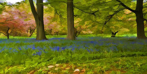 Woodland Watercolour Print by Trevor Kersley