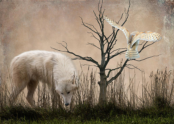 Woodland Wolf Print by Sharon Lisa Clarke