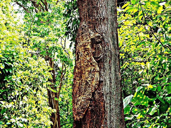 Woodpecker Tree Print by Piety Dsilva