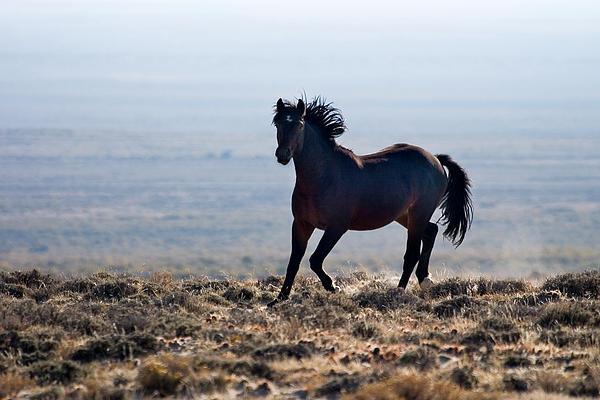 Darlene St John - WY Stallion