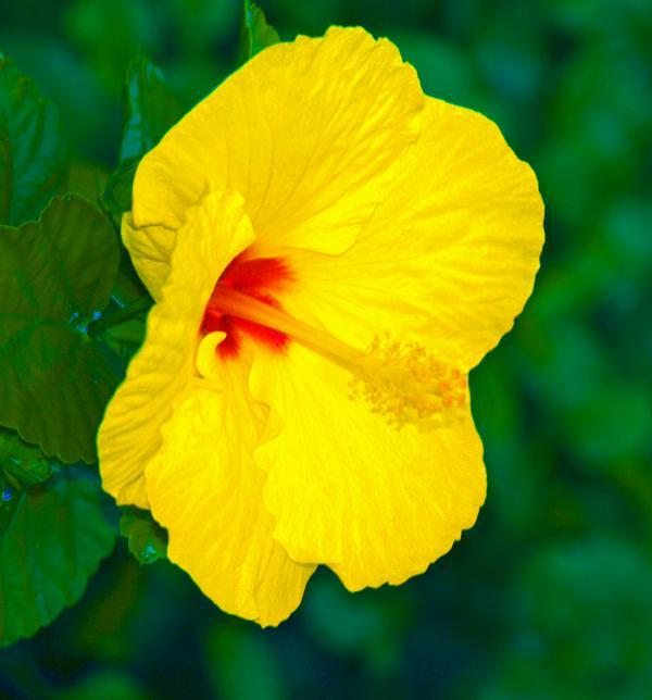 Athala Carole Bruckner - Yellow Blossom