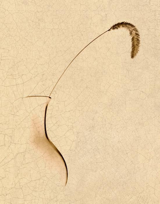 Yellow Foxtail Still Life Print by Tom Mc Nemar
