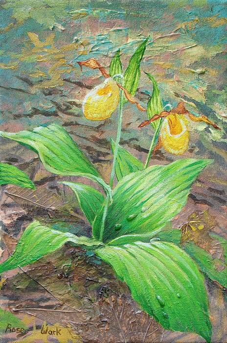 Yellow Lady Slipper Painting  - Yellow Lady Slipper Fine Art Print